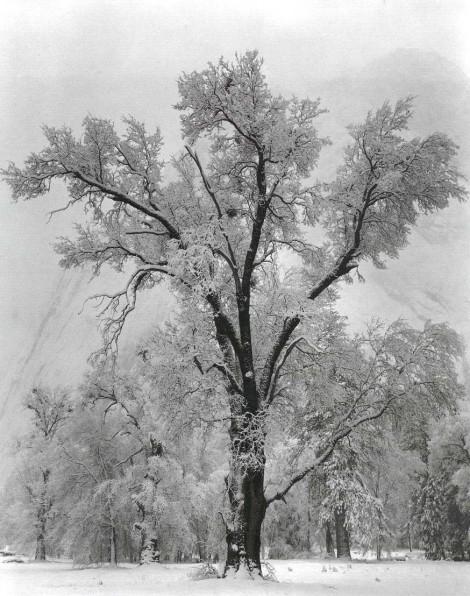 oak-tree-snowstorm1