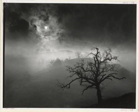Wynn Bullock Stark Tree 1956.