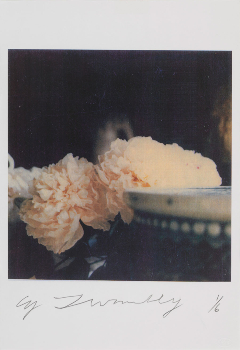 Peonies, Bassano in Teverina, 1980