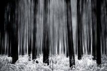 Chris Friel 8