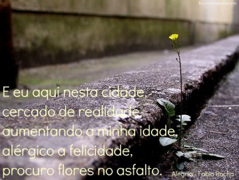 flor-no-asfalto